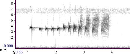 Guianan Warbling-Antbird song, Guyana Trail, Bolivar, Venezuela, 2 January 2007 (01-07).