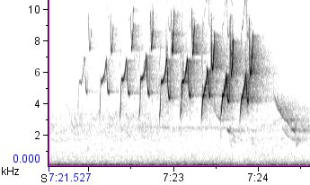 Prothonotary Warbler primary song, Phillips County, Arkansas, 4/4/2006.