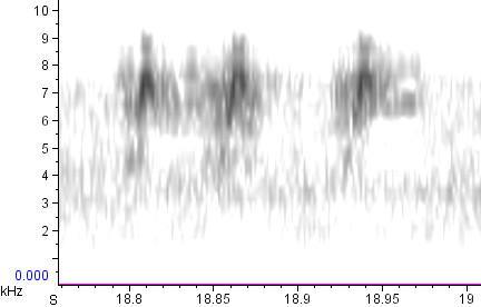Same as above, zoomed out slightly in the time axis.