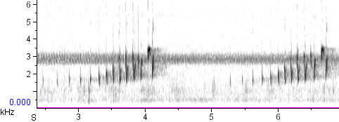 Buff-collared Nightjar song, Santa Cruz County, AZ, 5/21/2009. Recording by Andrew Spencer.