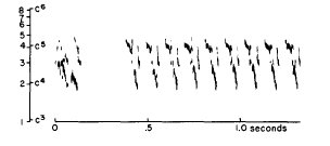 Canyon Towhee song, displayed on a logarithmic frequency scale. From Marshall 1964, Condor 66:346.