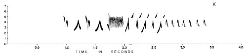 Yellow-eyed Junco song. From Marler & Isaac 1961, Wilson Bulletin 73:194.