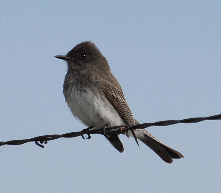 Wild Birds Unlimited | Colibríes | Springboro, OH