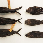 Dorsal view of female Black Swifts, from British Columbia (niger, at left) and Costa Rica (costaricensis, at right).